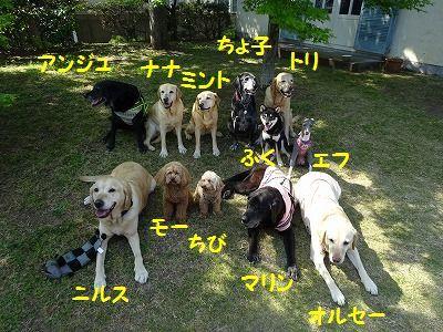 ようこそチーム富士宮に・・マリン&アンジュ(写真追加あり)_e0222588_06492463.jpg