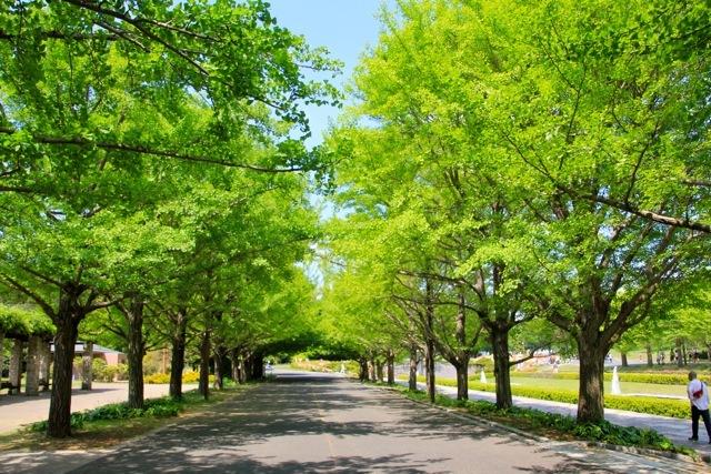 【昭和記念公園】part 1_f0348831_08512162.jpg