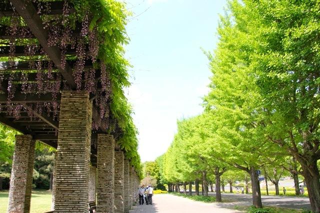 【昭和記念公園】part 1_f0348831_08512571.jpg
