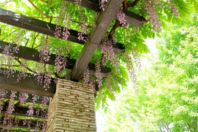 【昭和記念公園】part 1_f0348831_08512995.jpg