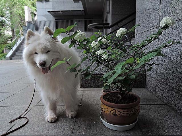 お散歩_c0062832_743358.jpg