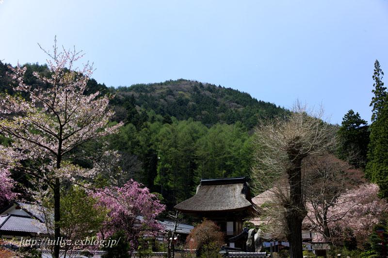 お寺の桜(1)_d0108132_19243350.jpg