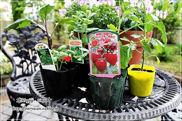 バターロールサンドと家庭菜園♪_f0348032_18520804.jpg