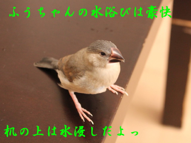c0365734_22441824.jpg