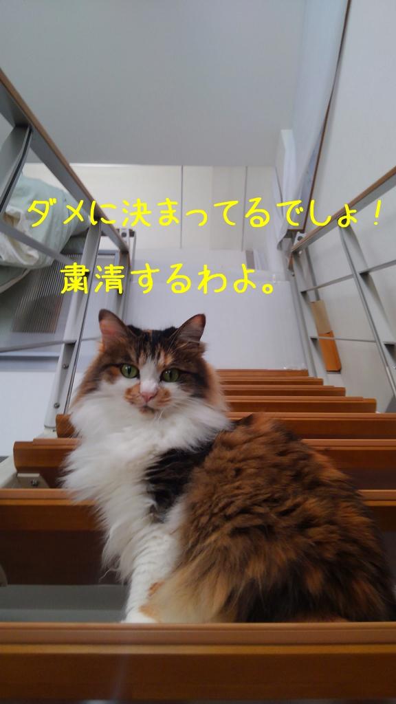 c0181639_063650.jpg