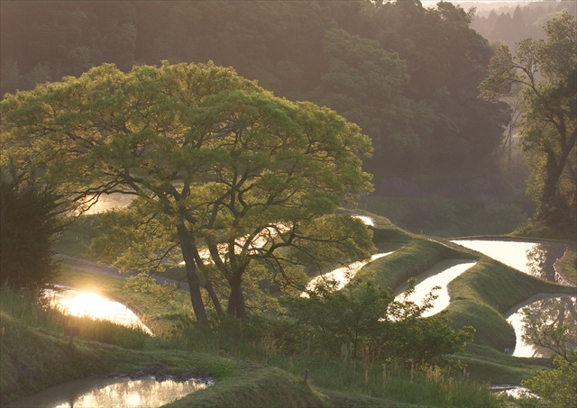 晩春の大山千枚田 2_f0018464_19583237.jpg