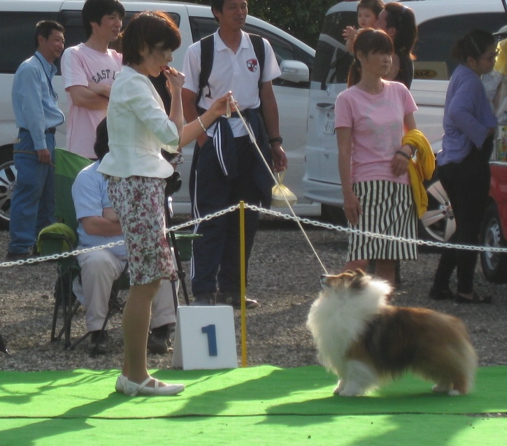 5.3 JKC東京南ドックファミリークラブ展_a0139367_19205698.jpg