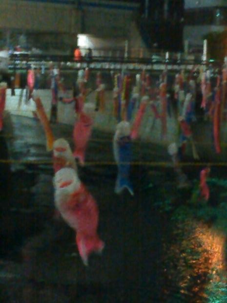 神田川の鯉のぼり・・・なんだけど_c0162773_11325876.jpg