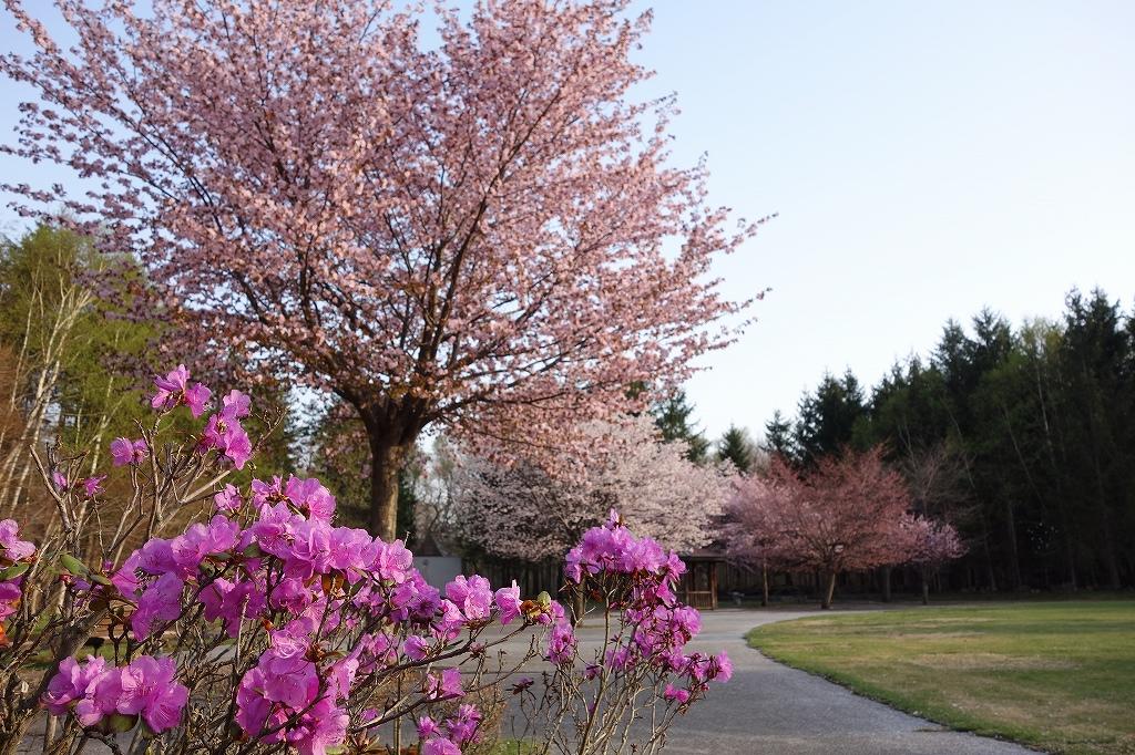 青葉公園_f0138096_1812470.jpg