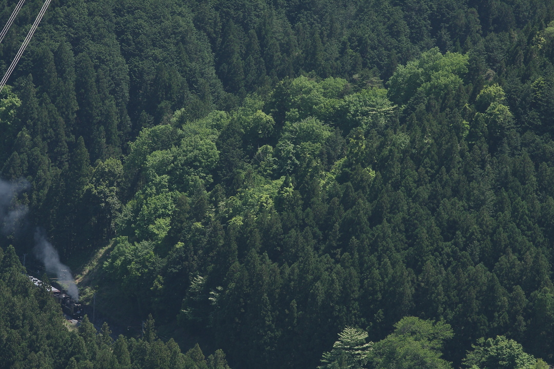 山は緑 - 2015年GW・秩父 -  _b0190710_2045745.jpg