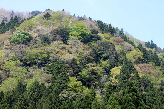 山が笑い始めた_e0048413_1746931.jpg