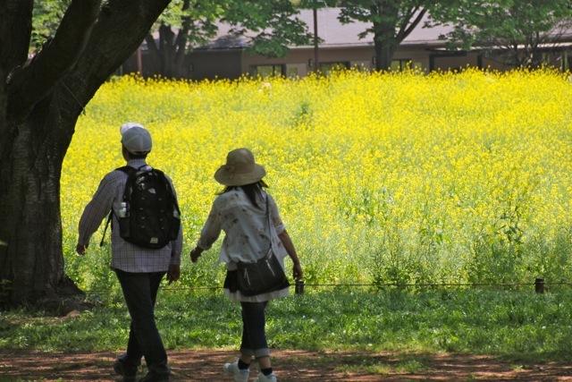 【昭和記念公園】part 2_f0348831_07400618.jpg