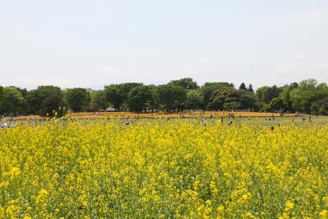 【昭和記念公園】part 2_f0348831_07401773.jpg