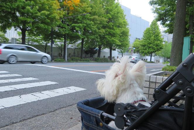 Golden Week。_b0107163_10303375.jpg