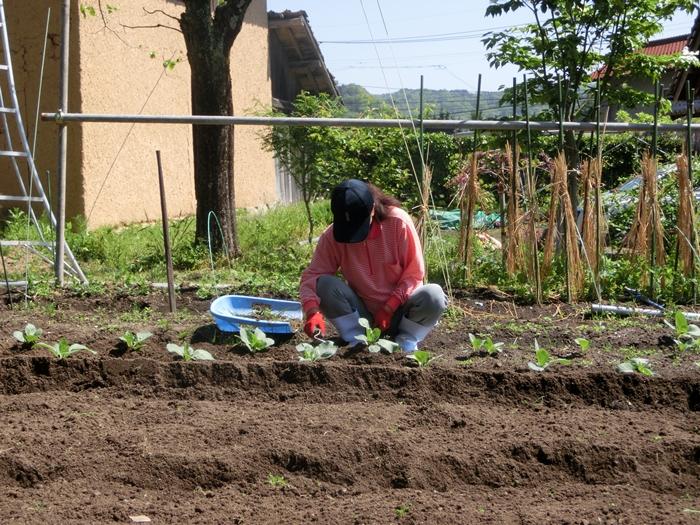 シンゴ菜園の種まき_a0199979_19331427.jpg