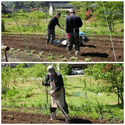 シンゴ菜園の種まき_a0199979_1933295.jpg