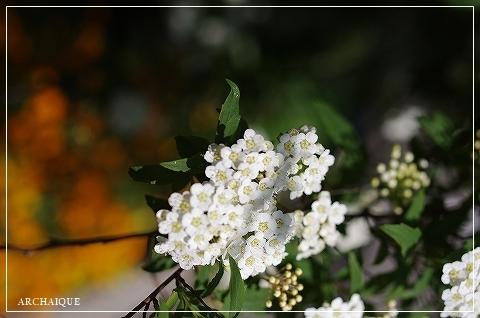 春過ぎて~_c0207890_14303219.jpg