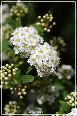 春過ぎて~_c0207890_14303602.jpg