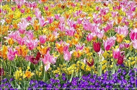 春過ぎて~_c0207890_14305295.jpg