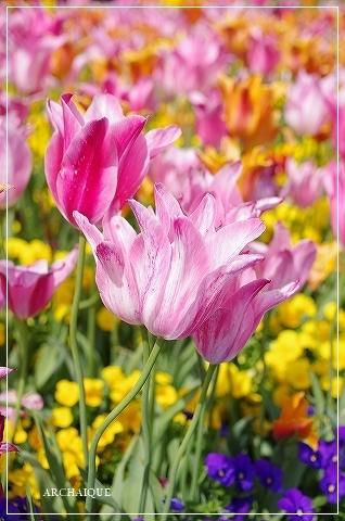 春過ぎて~_c0207890_14305782.jpg