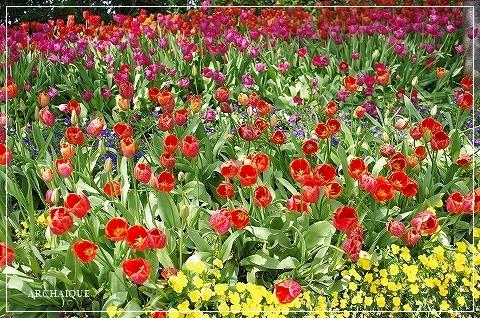 春過ぎて~_c0207890_14310464.jpg