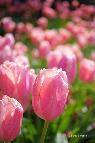 春過ぎて~_c0207890_14310932.jpg