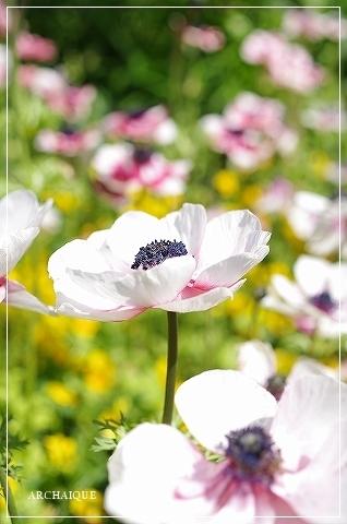 春過ぎて~_c0207890_14311460.jpg