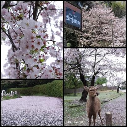春過ぎて~_c0207890_14313169.jpg