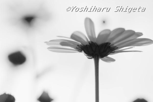 〜Flower〜_c0152400_3442687.jpg