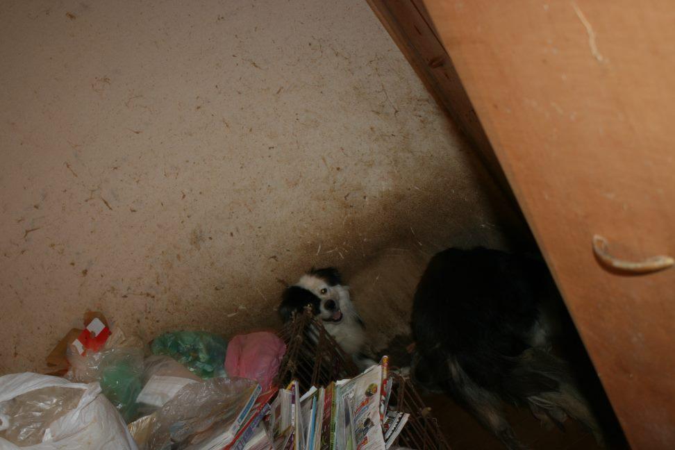 ゴミ屋敷20日がタイムリミットです_f0242002_8295513.jpg