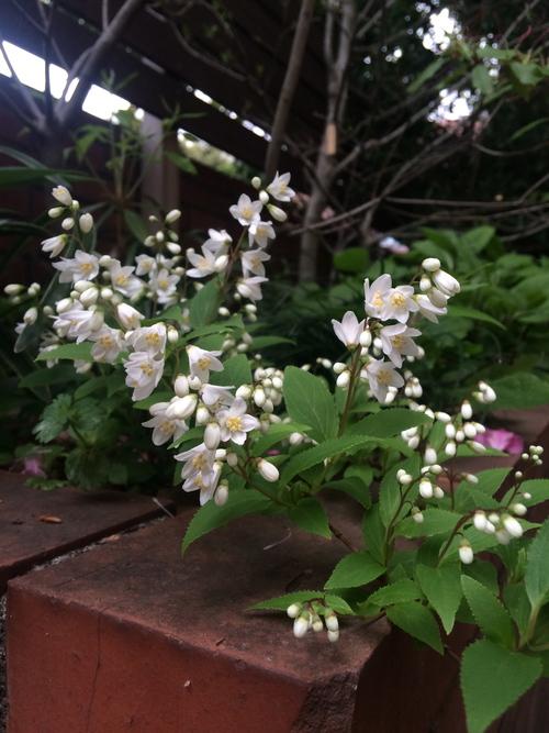 トトモニの庭_a0148909_15149.jpg
