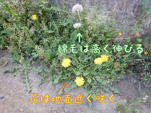 f0329311_1012251.jpg