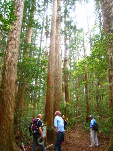 代々持続する自伐林家の森は天然林に近づいている_e0002820_15250745.jpg