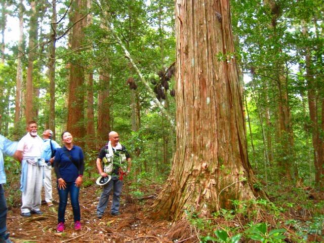 代々持続する自伐林家の森は天然林に近づいている_e0002820_15250844.jpg