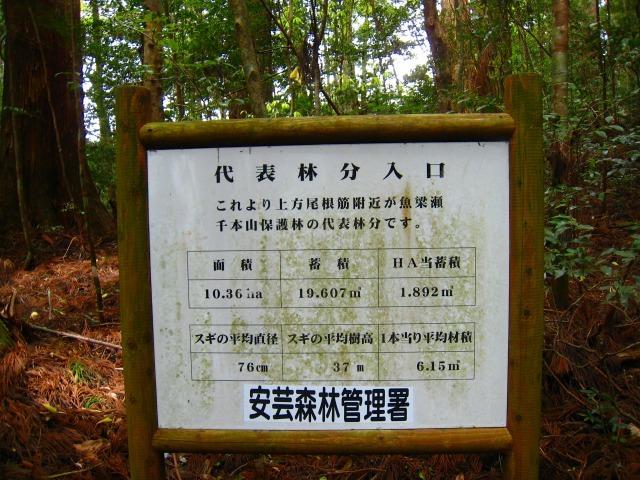 代々持続する自伐林家の森は天然林に近づいている_e0002820_15250851.jpg