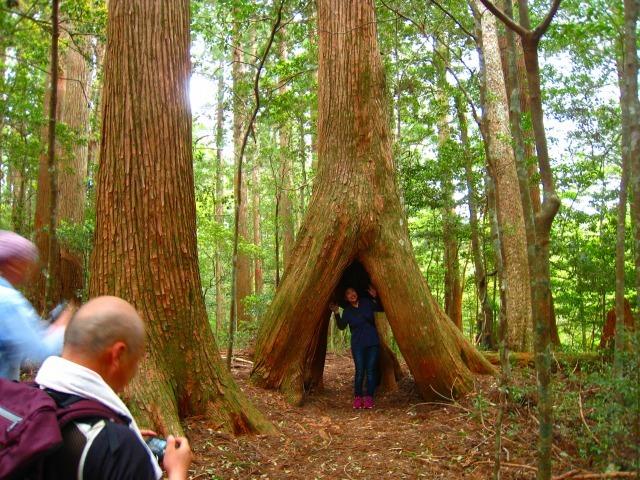 代々持続する自伐林家の森は天然林に近づいている_e0002820_15250883.jpg