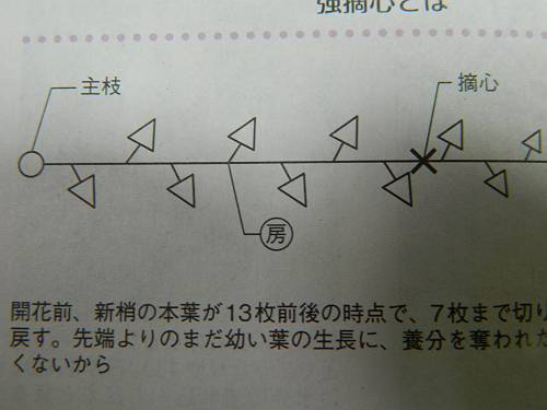 b0218444_17023896.jpg