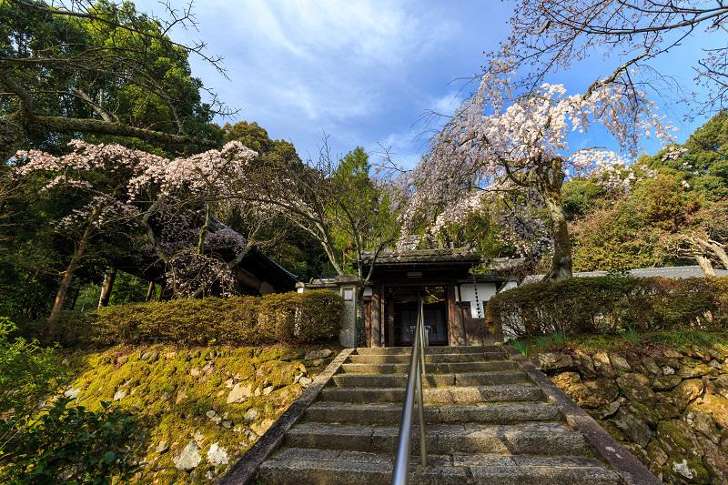 岩屋寺のしだれ桜_f0155048_23171093.jpg