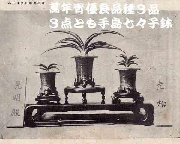 手島鉢の波千鳥紋の疑問                  No.1500_d0103457_00073214.jpg