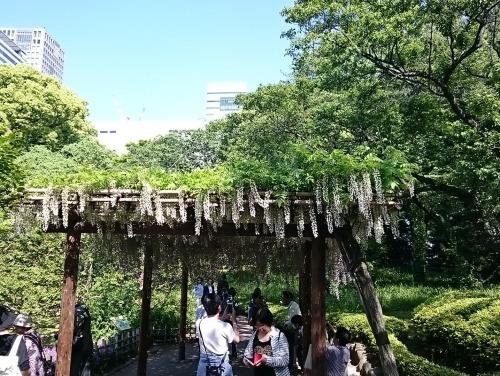 皇居東御苑に藤棚を見にいってきた!_c0100865_10351875.jpg
