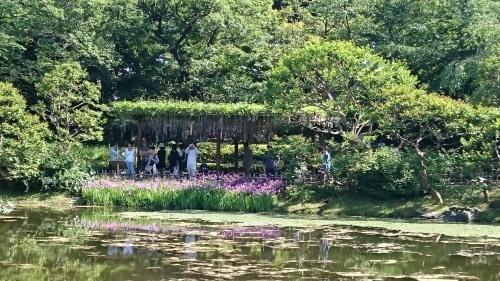 皇居東御苑に藤棚を見にいってきた!_c0100865_10392925.jpg