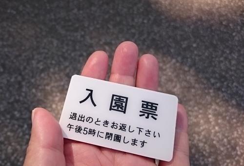 皇居東御苑に藤棚を見にいってきた!_c0100865_10395162.jpg