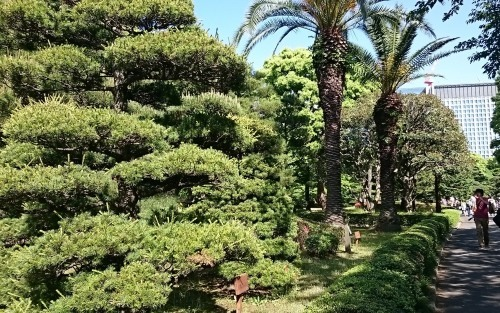 皇居東御苑に藤棚を見にいってきた!_c0100865_10420281.jpg