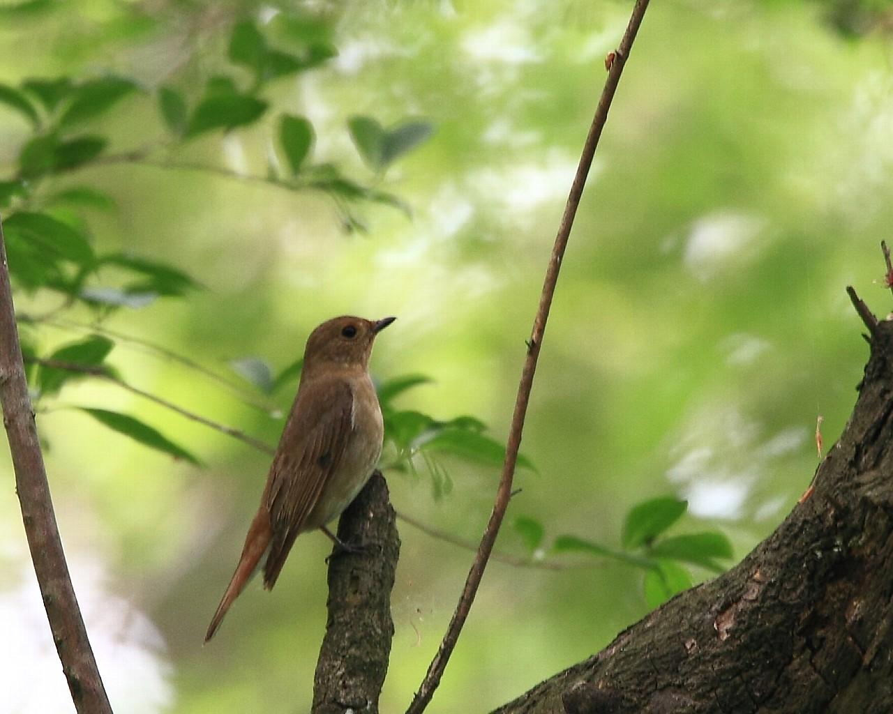 意外な場所で意外な鳥に逢えると嬉しいですね!_f0105570_2182355.jpg