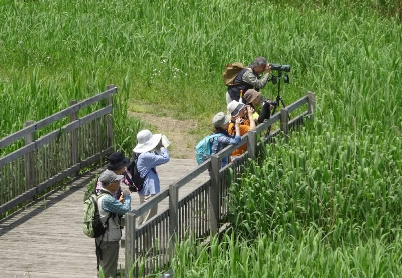 渡良瀬遊水地で自然観察会_f0059673_1918656.jpg