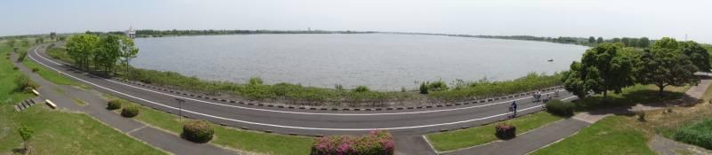 渡良瀬遊水地で自然観察会_f0059673_19234261.jpg