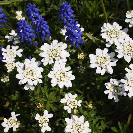 春のお庭、今年は早いです。_a0292194_21562584.jpg