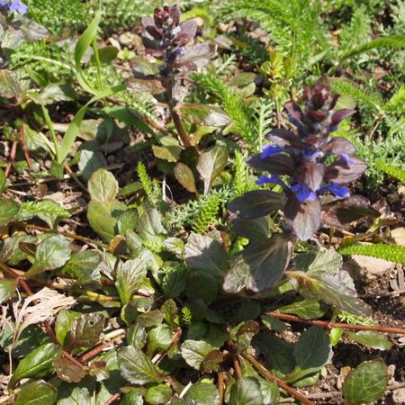 春のお庭、今年は早いです。_a0292194_2214445.jpg