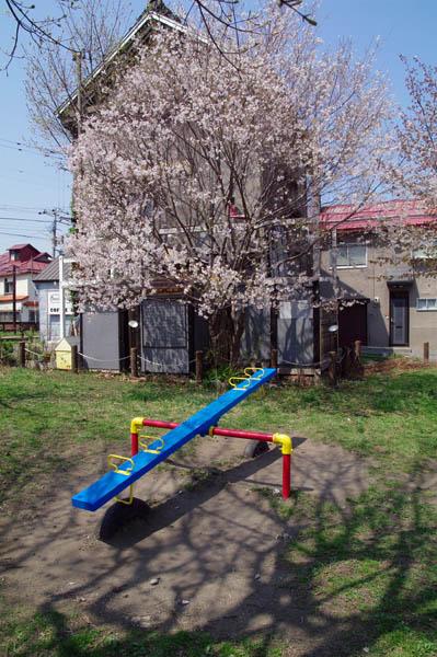 小樽桜めぐり 2015 #5_b0103798_447598.jpg