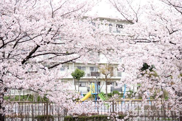 桜2015_a0115202_1375713.jpg